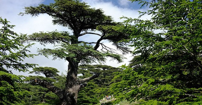 Cedars of Lebanon, Kozhaya, and Becharreh Day Trip