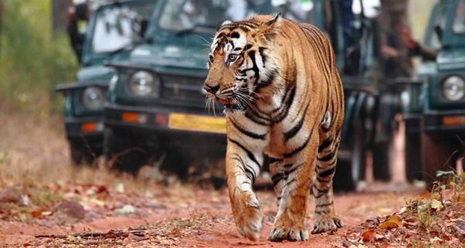 India - Golden Triangle Tour & Tiger Safari